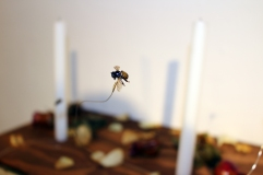 Untitled (Altar) (detail) Dimensions Variable Dead Bees, Wire, Dead Roses, Acrylic Gel, Candles, Stain on Wood 2014