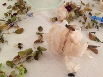 Empathy/Relic #2 (detail) Medical Ephemera, Dead Insects, Dead Flowers, Garlic 2013